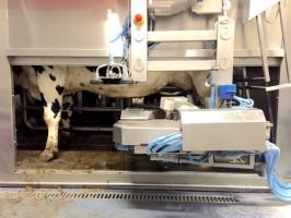 Opstarten van de melkrobots
